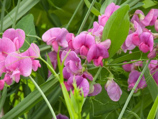 お祝いに使いたい!おめでとうの花言葉を持つ5つの花